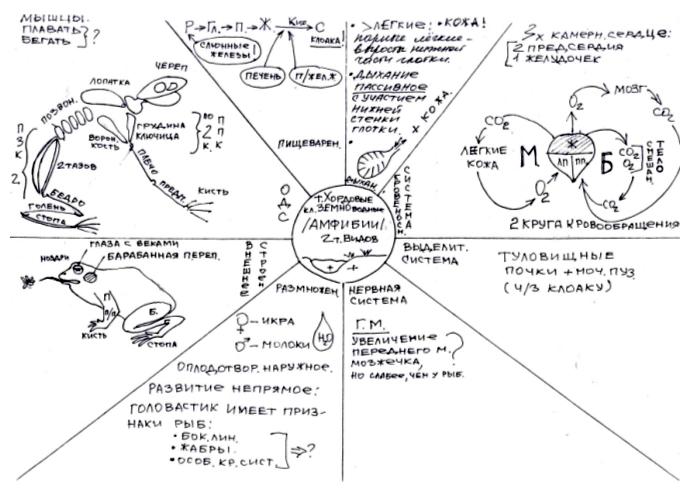 Опорные сигналы шаталова по биологии